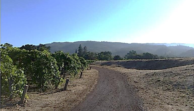 basebind_vineyards.jpg